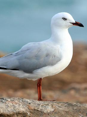 The Eighth Podcast: Seagull Medicine & The Ordinary