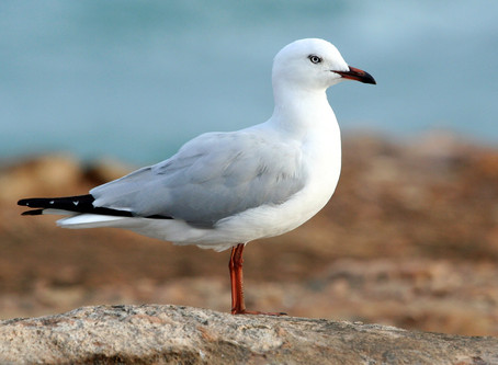 The Eighth Podcast: Seagull Medicine & The Ordinary