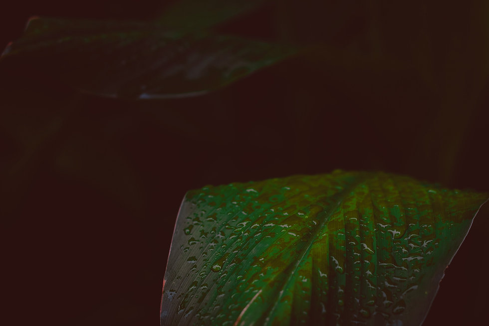 green-leafed-plant-1203379_edited.jpg