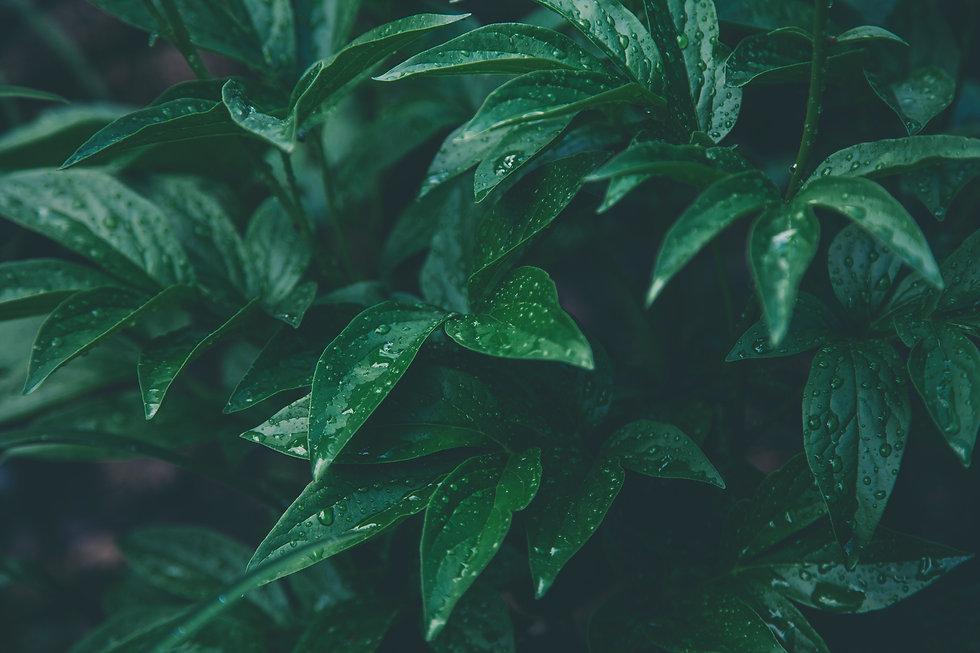 green-plants-1089455.jpg