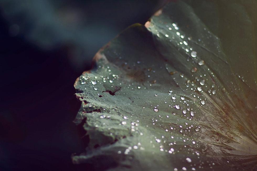 abstract-art-background-blur-589179.jpg