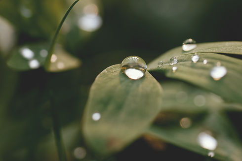 blur-close-up-dewdrop-drop-of-water-5346