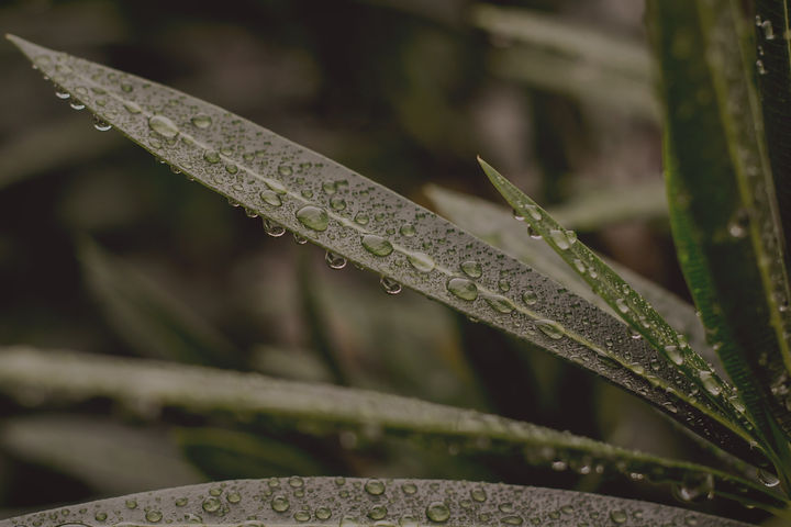 close-up-photography-of-leaves-with-water-droplet-1033922_edited.jpg