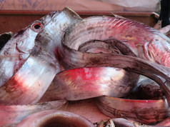 Eels at the fish market in Catania, Sicily