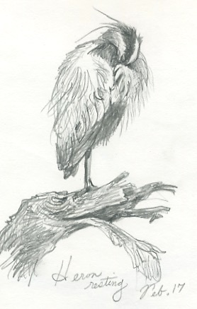 Heron resting