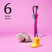 6月 2020イオンペットカレンダー