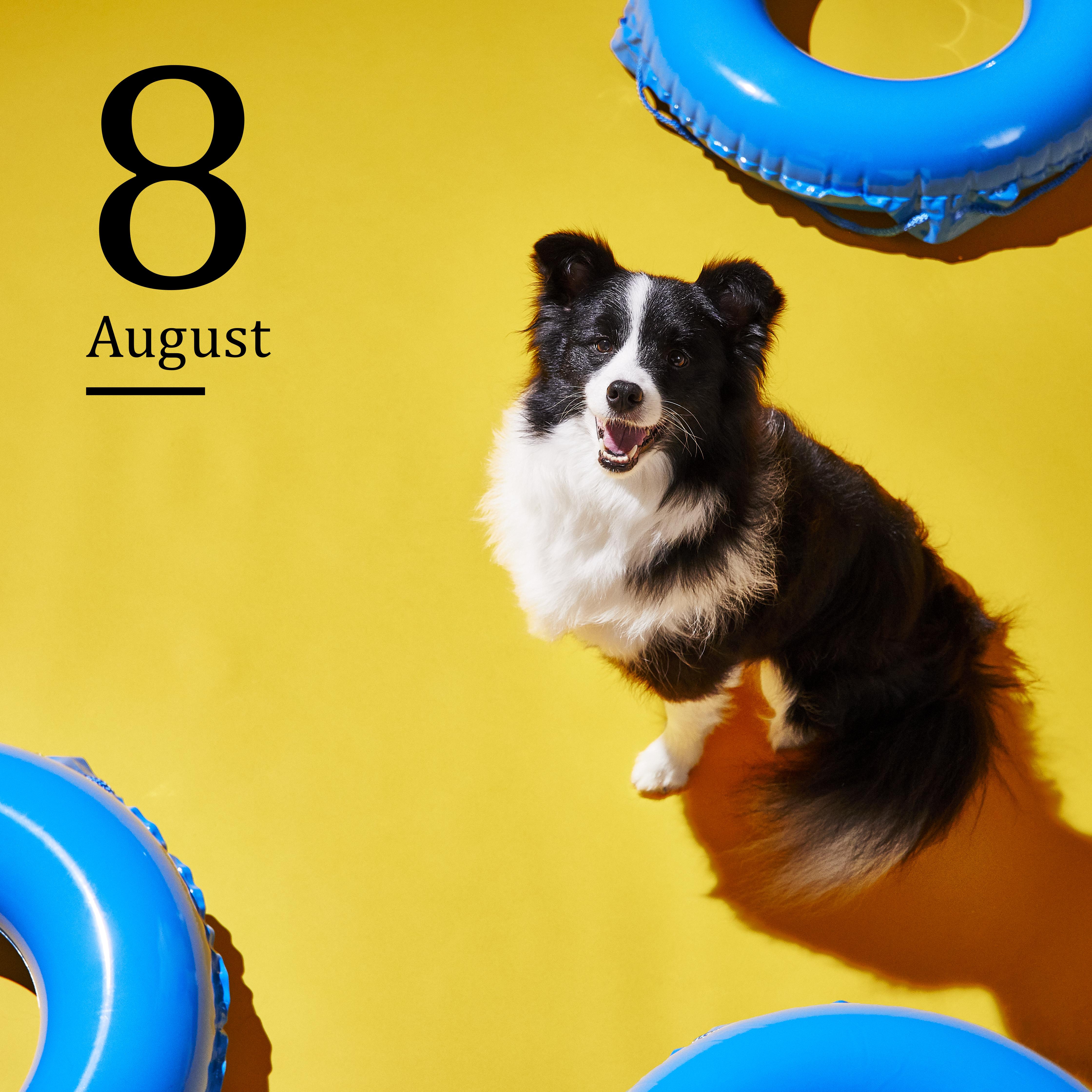 8月 2020イオンペットカレンダー