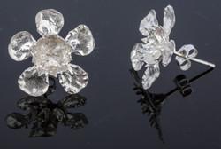 Geraldton Wax Flower Studs