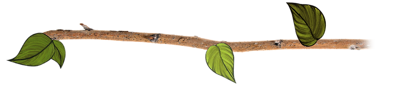 branch-with-grandmother-leaves2-B.png
