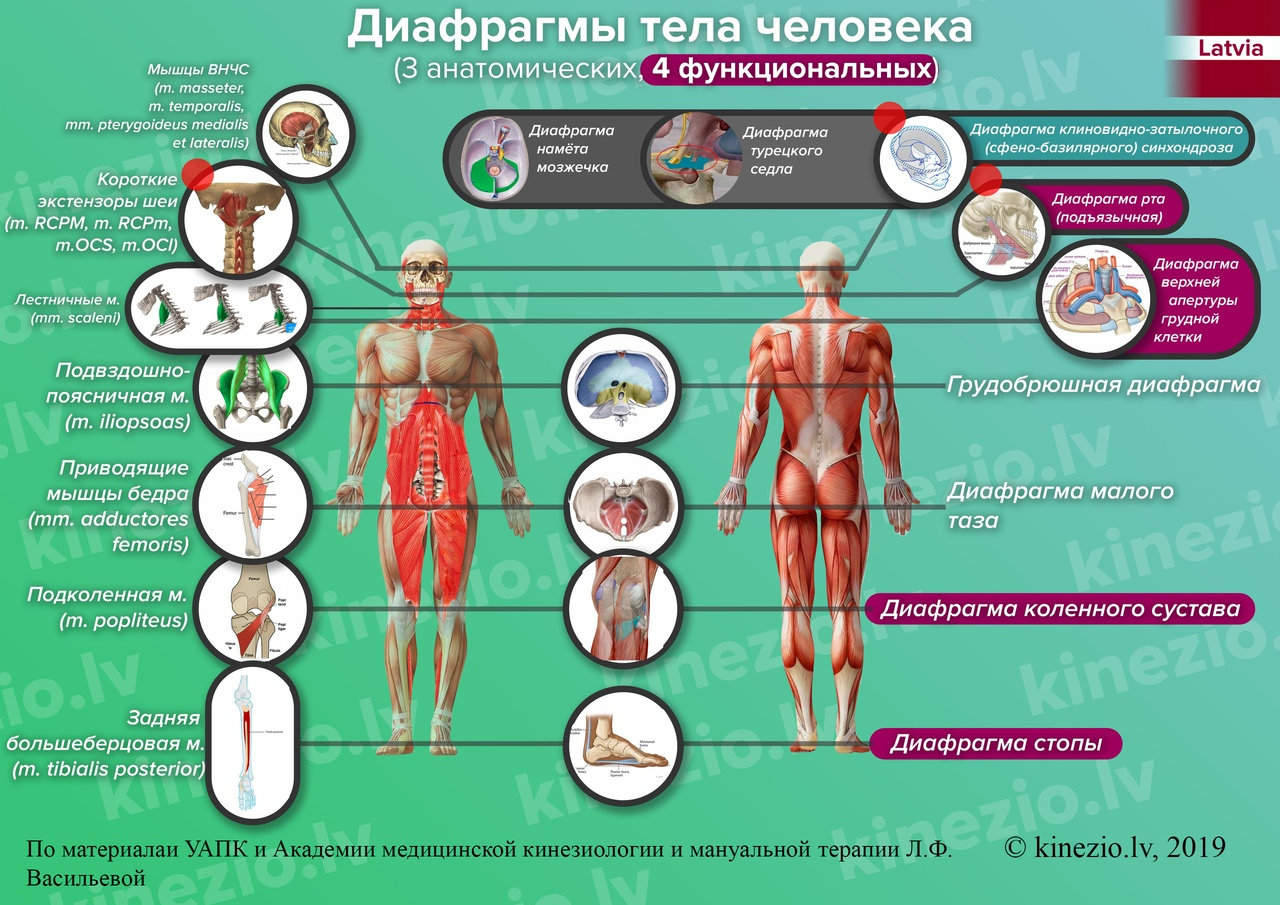 Коррекция дисфункций организма