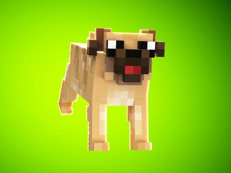 Pug Pet
