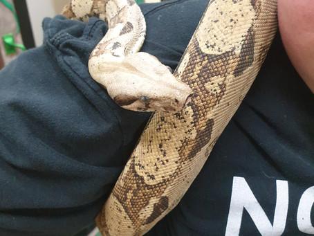 Ziggy's Snakes
