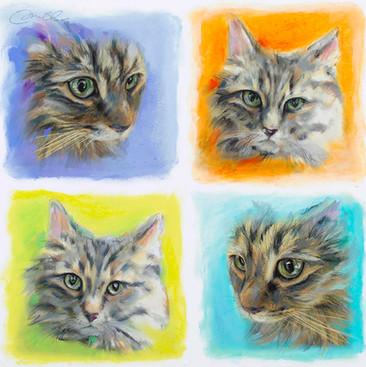 4 Sq Cats