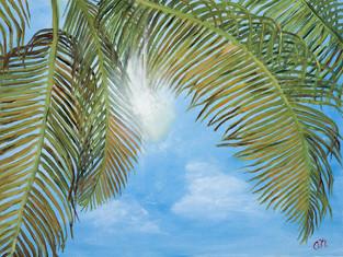 Palms-1971