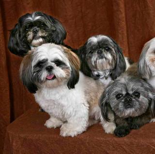 Lilo and friends