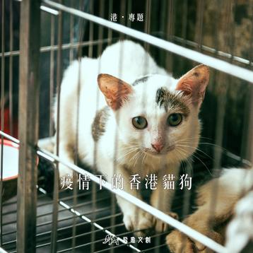 #港.專題【疫情下的香港貓狗】