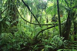 congo-jungle-ctt