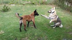 communication entre Miia et Lobo