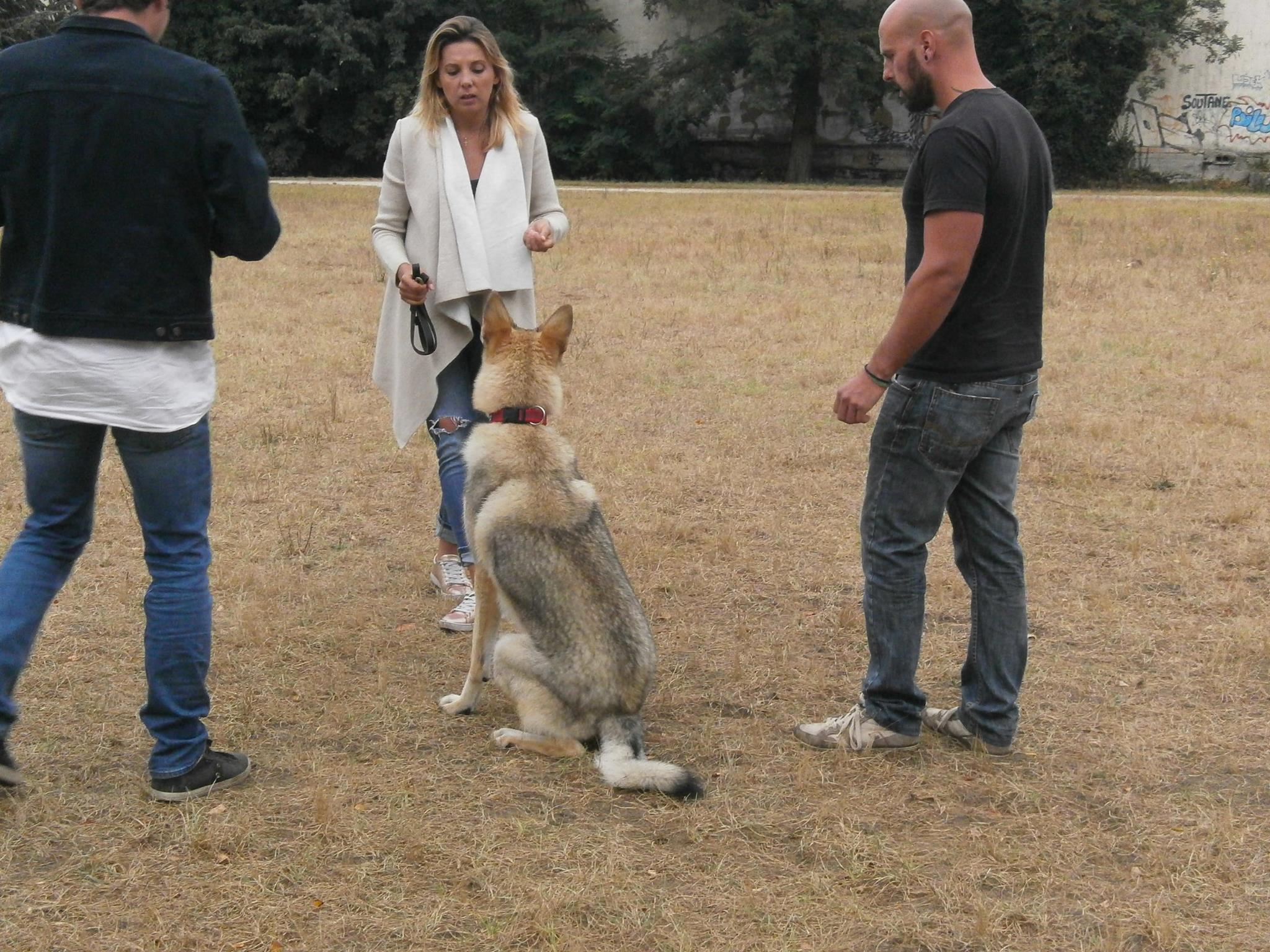 Lobo (chien loup tchécoslovaque)