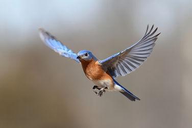 150402-Birds-In-Flight.jpg