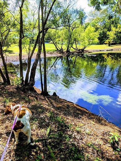 Pond_dog.JPG