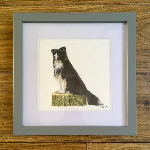 'Border Collie' - Framed mini print