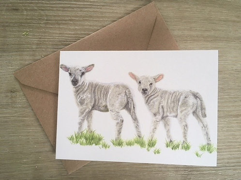 Lambs Greetings Card