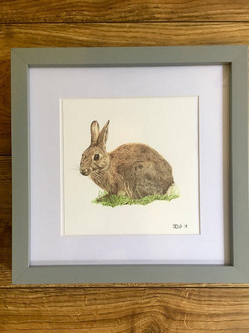 'Bigwig' - Framed mini print