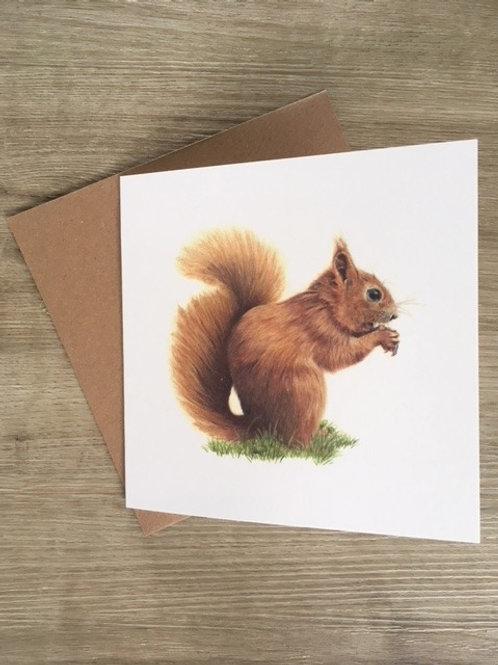 Nutkin - Red Squirrel Greetings Card