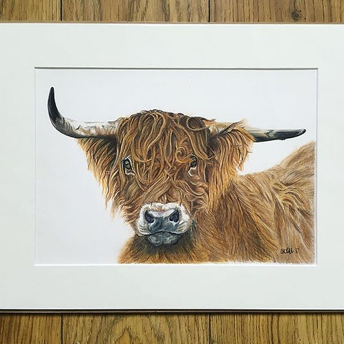 Hamish - Highland Cow in Coloured Pencil