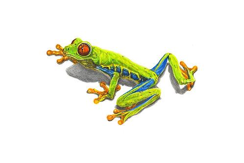 Tree Frog - Giclee Print