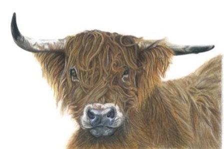 Hamish - Highland Cow Coloured pencil - Print