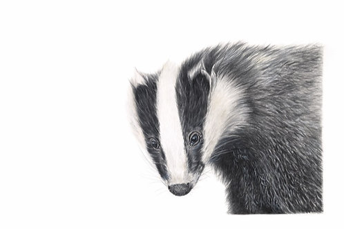 Brock - Badger Giclee Print