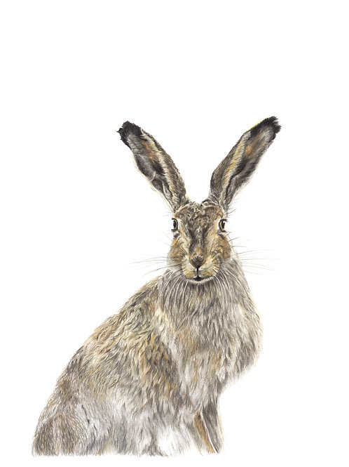 All Ears - coloured pencil drawing - Giclee Print