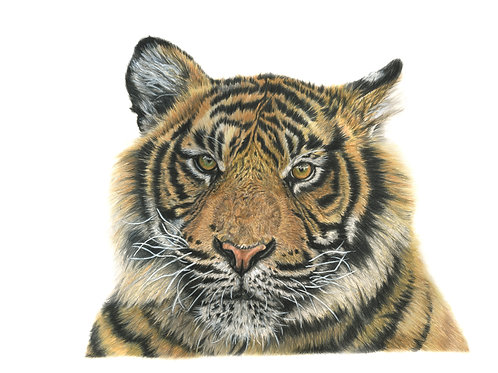 Call of the Wild - Coloured pencil Giclee Print
