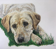 Here's the finished portrait, the grass