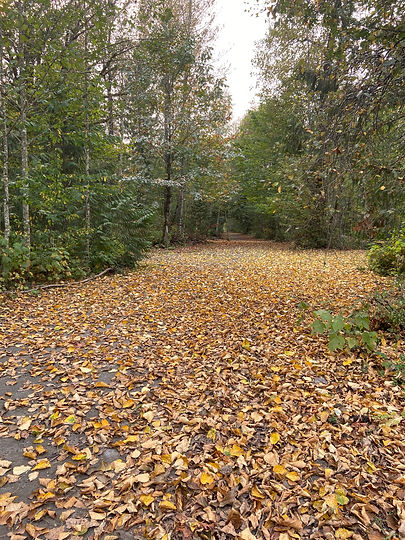 The road through our property Aug. 20.jp