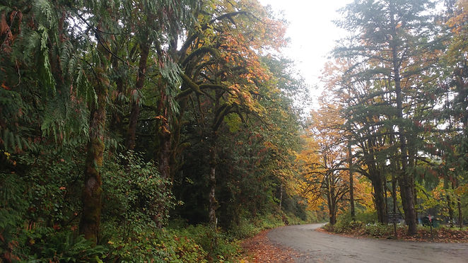 Forest Rd in Fall.jpg