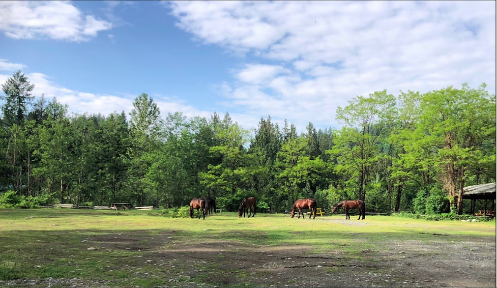 Horses In Picnic Area.png