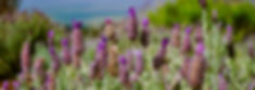 wild flowers purple flowers in a field meadow fit traveling mama
