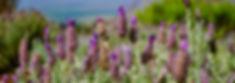 wild flowers purple flowers in a field meadow fit traveling mama