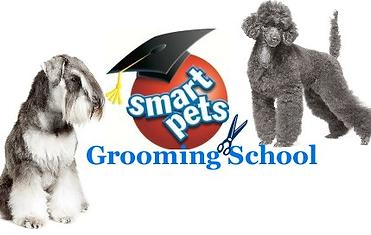 Smartpets Dog Groomer Training Northern Ireland City Guilds