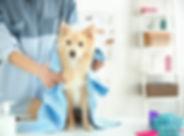 dog groom web3.jpg