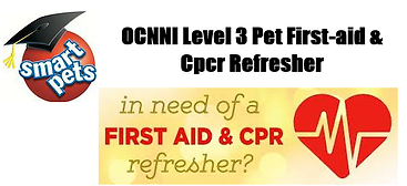 refresher first aid smartpets.png