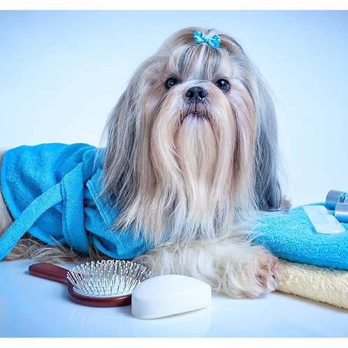 OCN LEVEL 3 CERTIFICATE IN COMMERICAL DOG GROOMING AND SALON MANAGEMENT