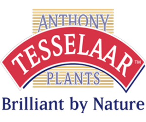 Tesselaar logo.png