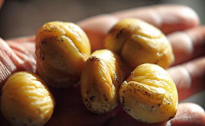 marrons d'Evisa-marina ceccaldi-corse_37