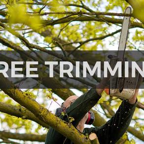 Community Tree Trimming