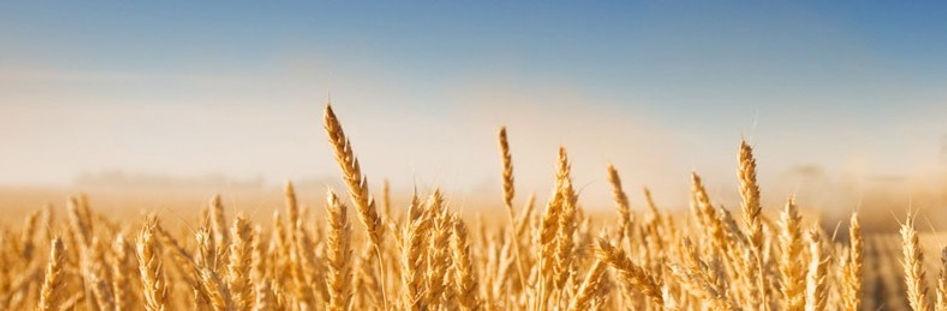 Harvest_edited_edited_edited.jpg