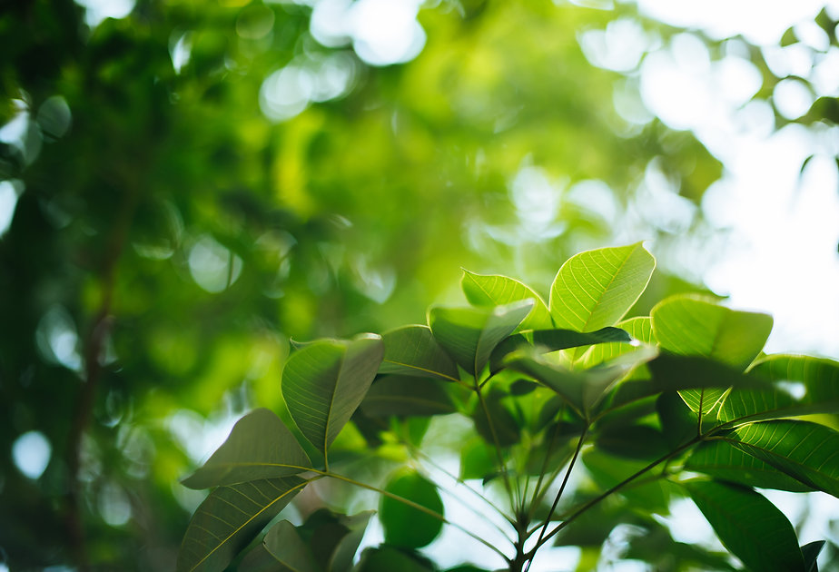 foglie.jpg